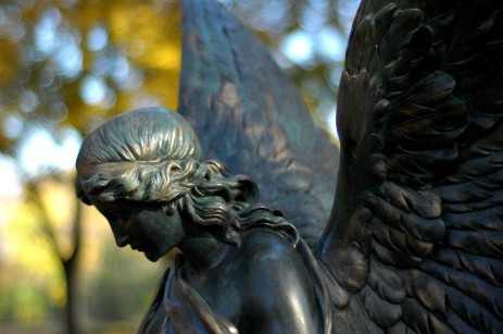 angel profile