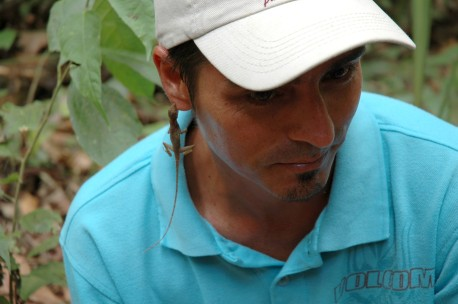 anole hanging on guide Josue's ear, Rainmaker
