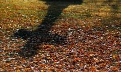 cross shadow, Kerepesi