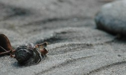 hermit crab on beach, MA