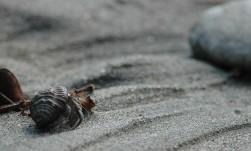hermit crab on beach, MA