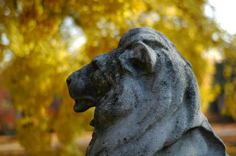 lion head with yellow leaves