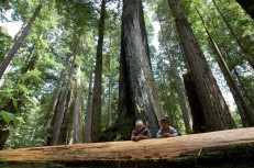 Logan and D checking out the redwoods