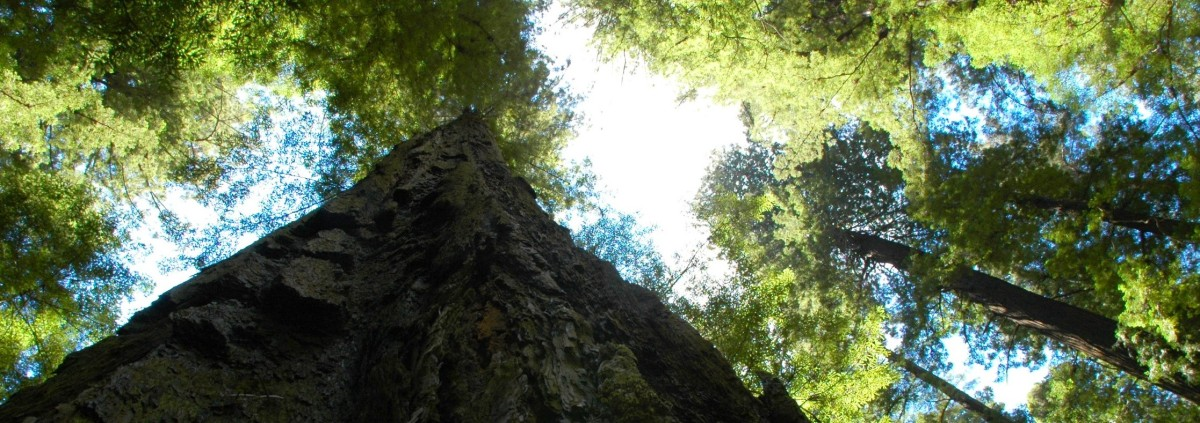 Trinidad, California, and the Redwoods