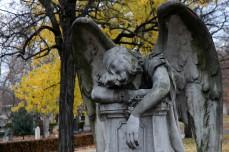 sleeping angel with yellow foliage