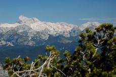 peaks with evergreen in foreground, Vogel