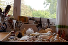 shell display and window sill