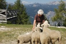 the sheep love Grandma 2