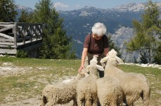 the sheep love Grandma 2