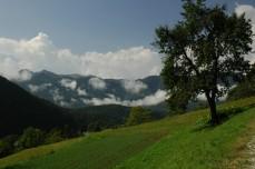 tree and mountains, Studor