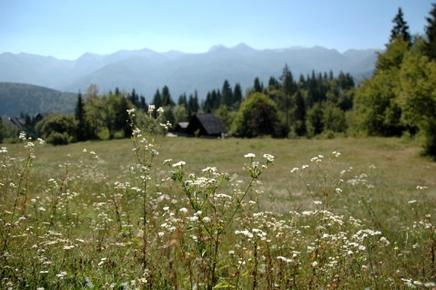 wildflowers and distant peaks, Mostnica