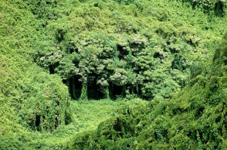 caverns of green