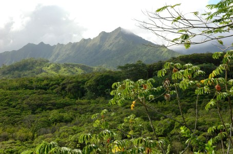 Hiking, Kuilau ridge trail