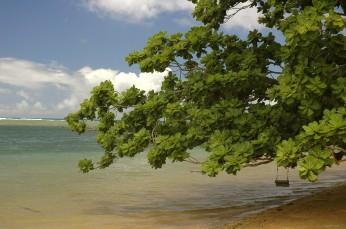 Tree swing, Anini