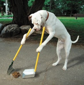 dog scooping poop