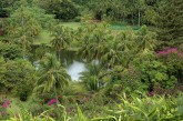 Lawai stream