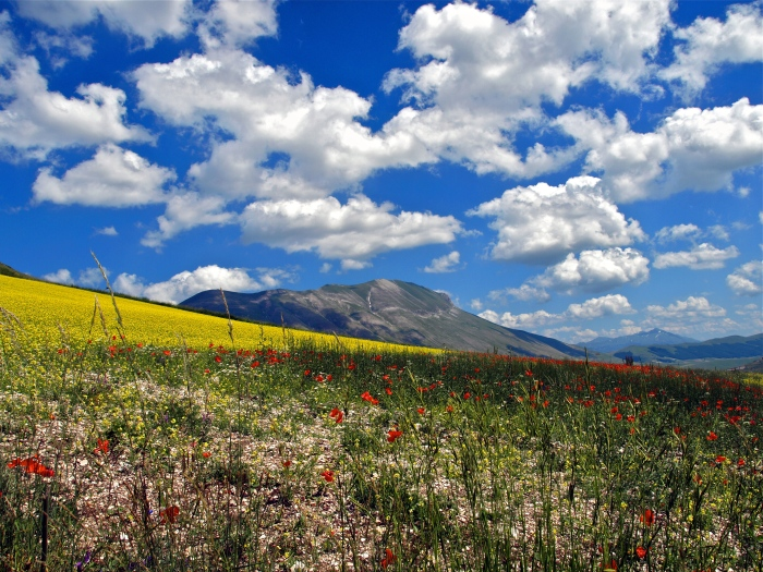 Wildflowers and clouds, Italy