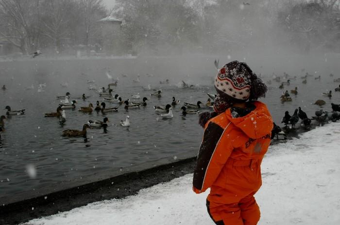 D watching the birds, Varosliget