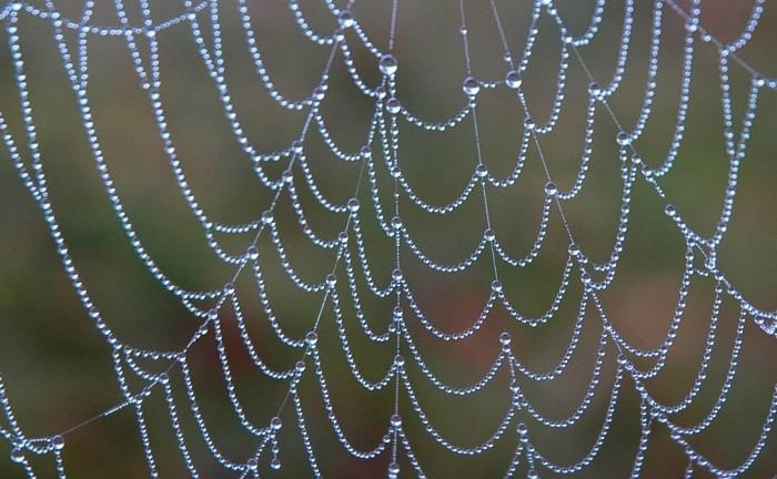 Dew on spiderweb, Klamm, Austria