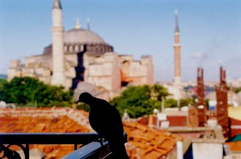 dove and hagia sofia