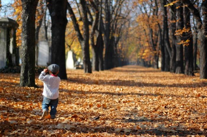G walking on leafy lane, kerepesi