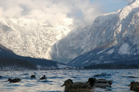 Mountains and mallards, Hallstatt, Austria