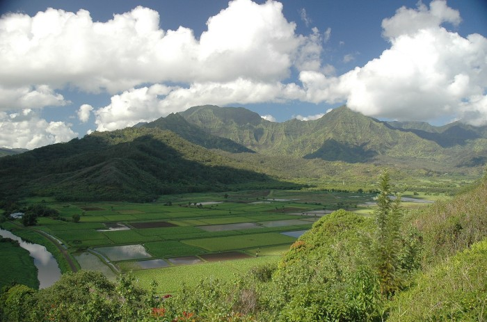 taro fields, Hanalei valley