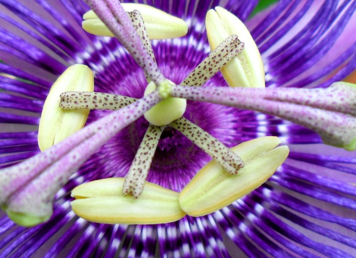purple flower closeup