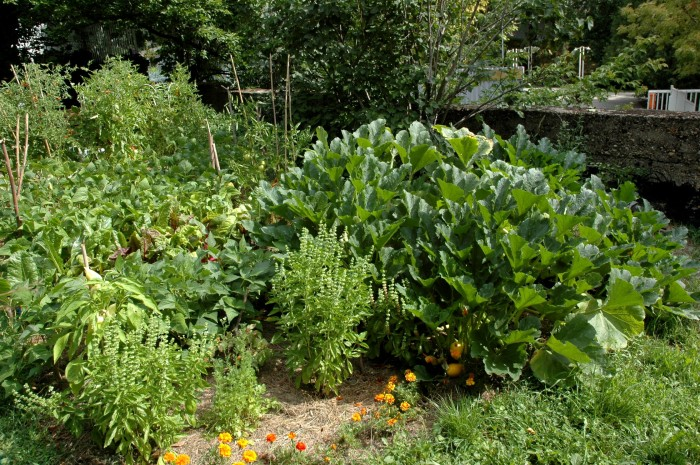 A portion of last summer's garden