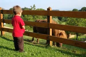 G with pony