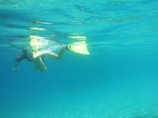 Summer snorkeling