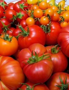 What real tomatoes look like