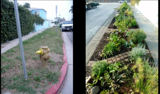 Before and after shot of one of Finley's urban gardens