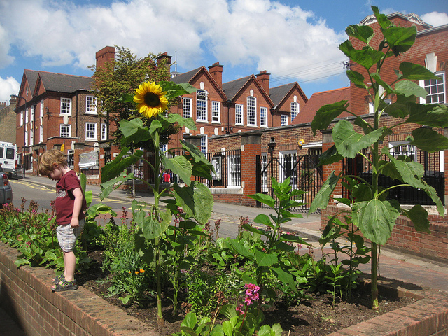 Guerilla garden in Herringay, England