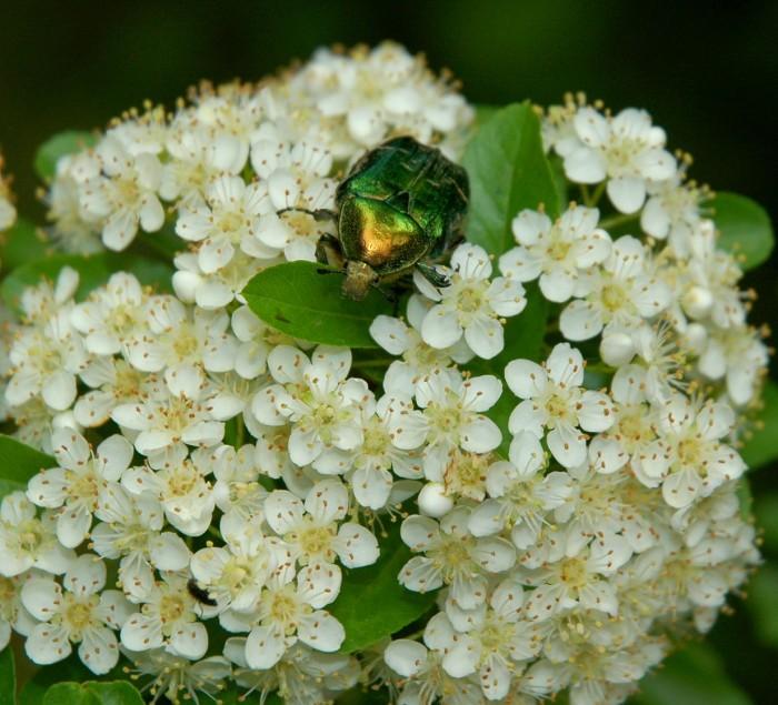 beetle closeup2
