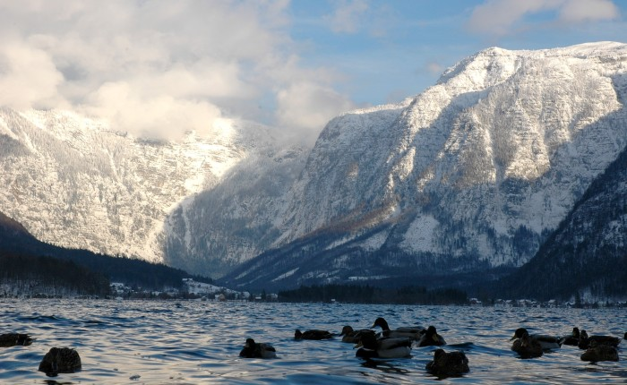 Hallstatt See with mountains and mallards
