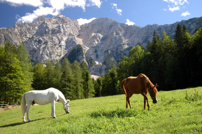horses and peaks, Makek farm