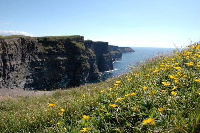 yellow flowers and cliffs of Moher