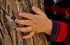 Touching a tree, then touching your face, isn't, in fact, deadly.