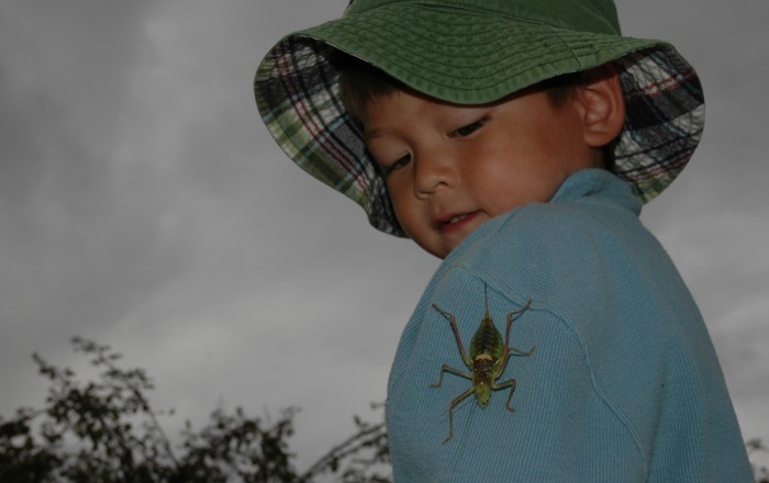 Griffin with big grasshopper2