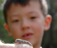 Checking out a baby gecko