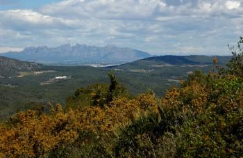 maquis habitat with montserrat