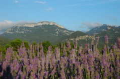 lavender and mountains, mas figueres