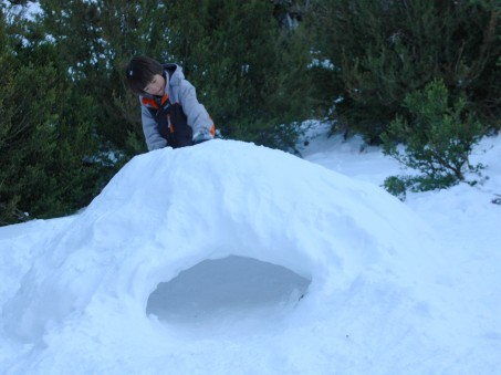 d on igloo