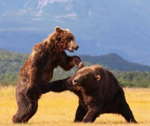 bear punch