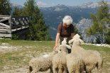 mom with sheep