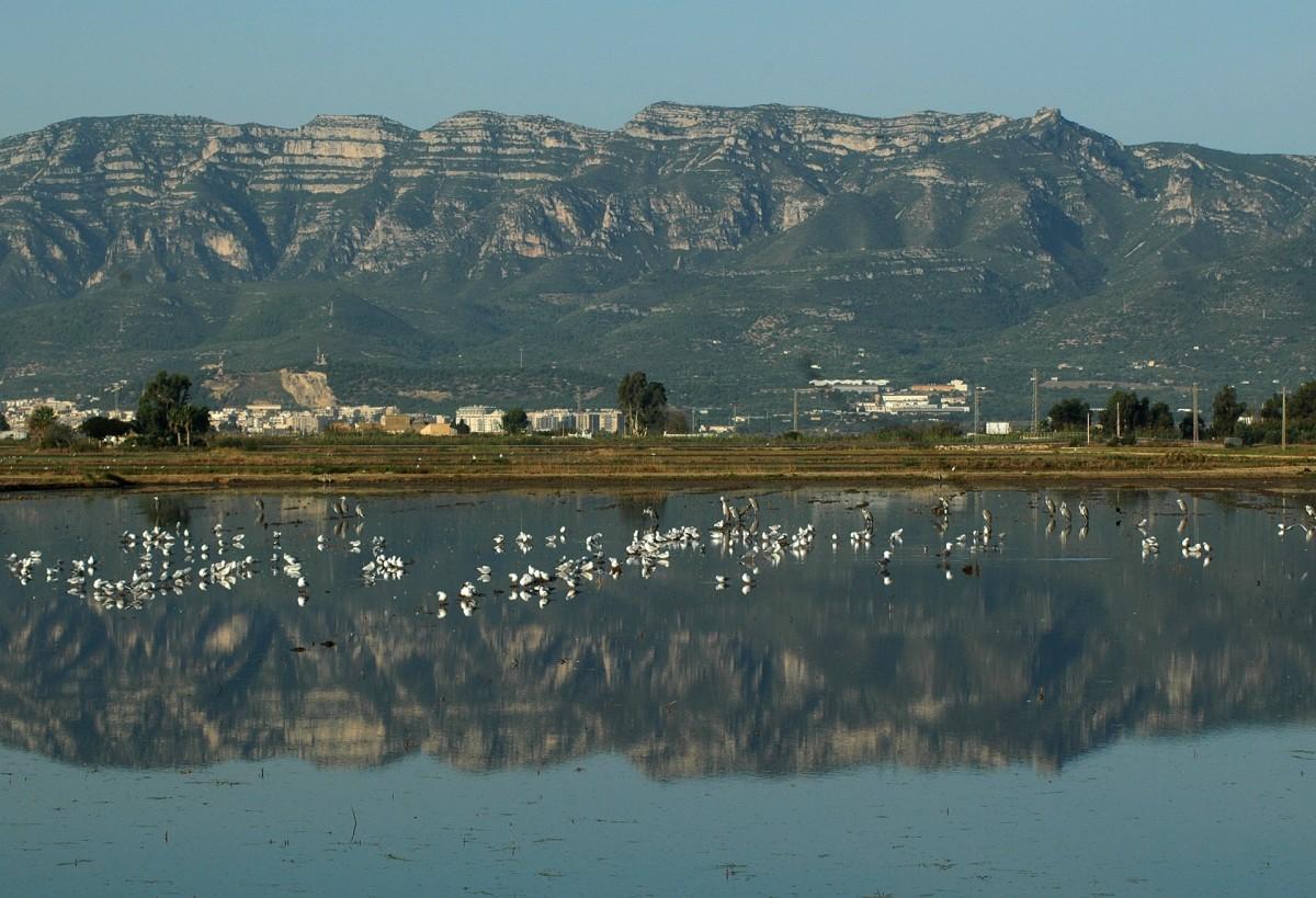 Birding Spain's Ebro Delta