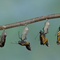 Teaching Kids the Magic of Metamorphosis